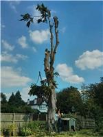 Emsworth Tree Care