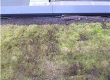 Stripped existing single ply green roof, repaired leaks and replaced with 3 layers built up felt and