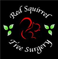Red Squirrel Tree Surgery Ltd