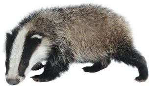 Badger Cleaning Services