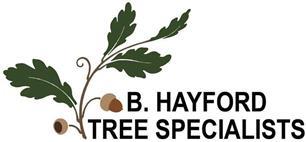 B.Hayford Tree Specialist