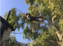 The Tree Musketeers - Tree Surgeons