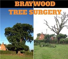 Braywood Tree Surgery Ltd