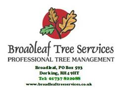 Broadleaf Tree Services