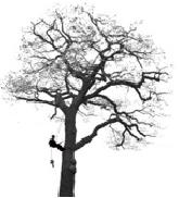 J J L Trees Ltd