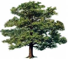Boundary Tree Care