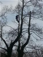 Arboriculture Specialists